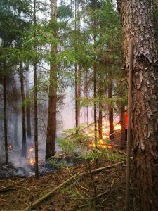 ba1 - Kleinbrand außerorts